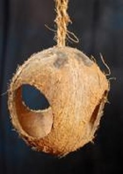 3 Hole Hanging Coconut Toy